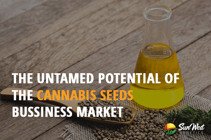 cannabis seeds business
