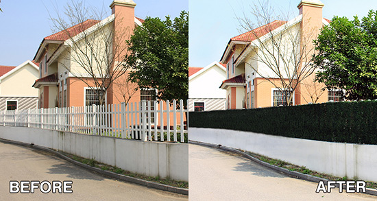 comparison outdoor boxwood hedge panels before and after