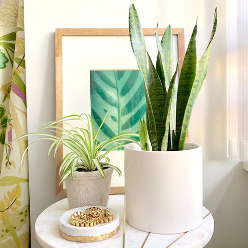Decorate Home with Artificial Snake Plant Pots