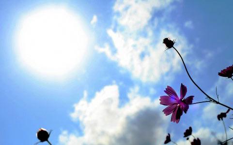 太陽とビタミンD