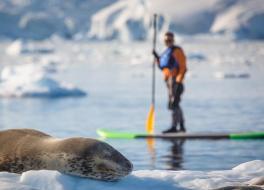 Leopard Seal. Image David Merron