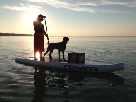 Dog on a SUP