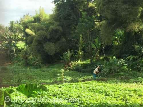 Rice Farmers in Bali