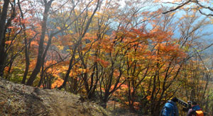 chichibu_autumn_color