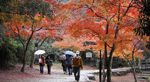 miyajima_autumn_colors