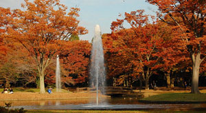 yoyogi_autumn_colors