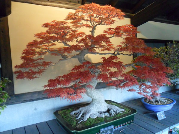 showa_kinen_bonsai_2