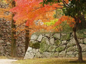 ohori_park_autumn