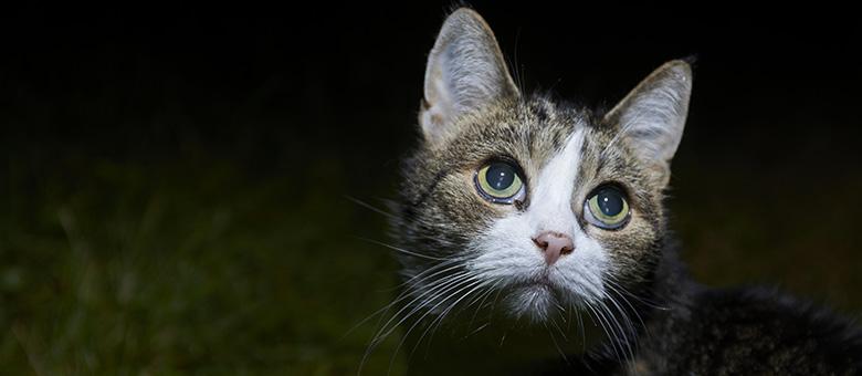 Adolescent chatte se déplace