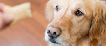 Les friandises en cuir brut sont-elles bonnes pour votre dogue? 13