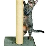 Comment choisir votre prochain chat 8