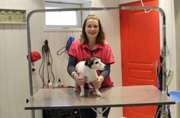 nouvelles avenues dexpansion ciseaux de toilettage pour chiens