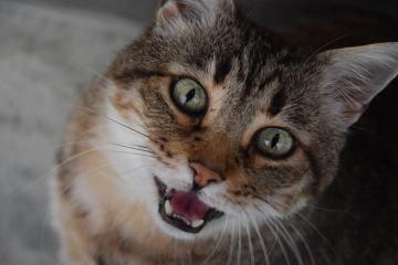 3 toux de chat et pourquoi ils se produisent