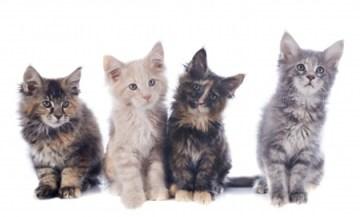 differents jouets pour chaton pour differents traits de chaton