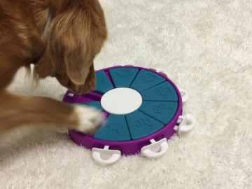 meilleurs jeux pour jouer avec des chiens