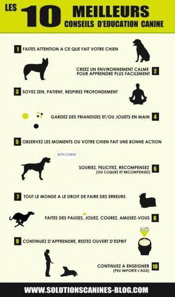 de bons conseils pour dresser votre chien