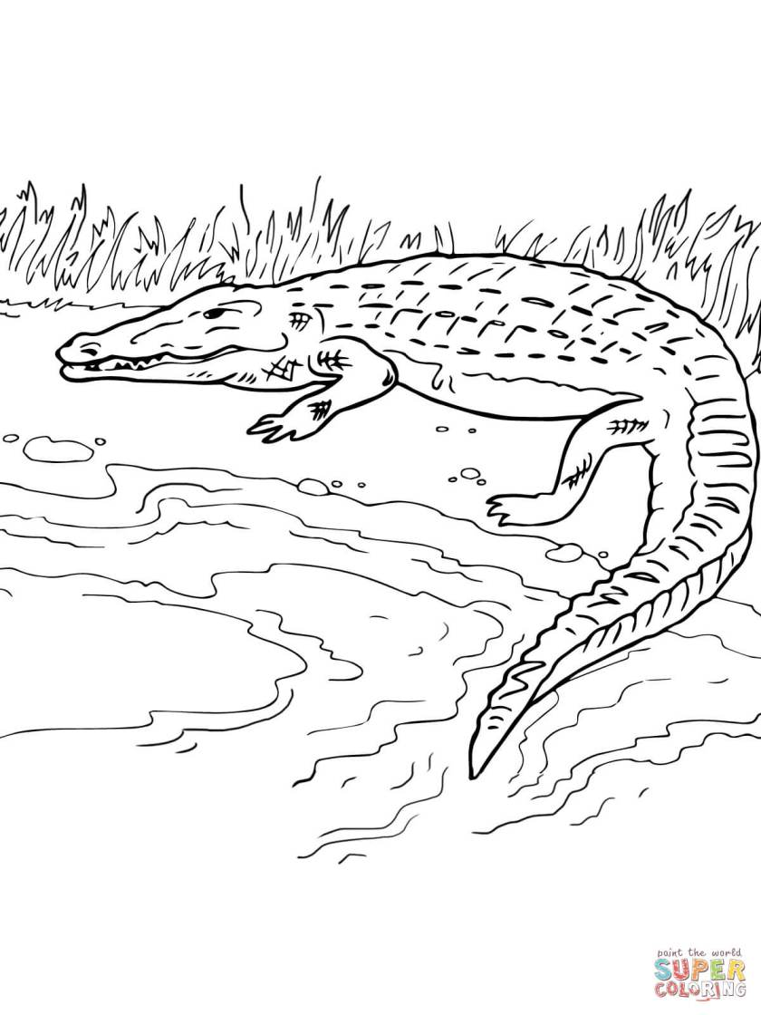 crocodile on the river bank coloring page  free printable
