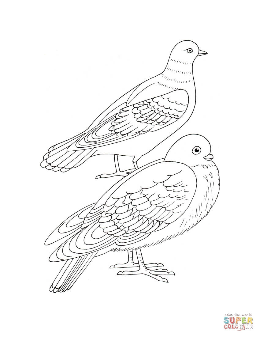 turtle dove coloring page coloring pages