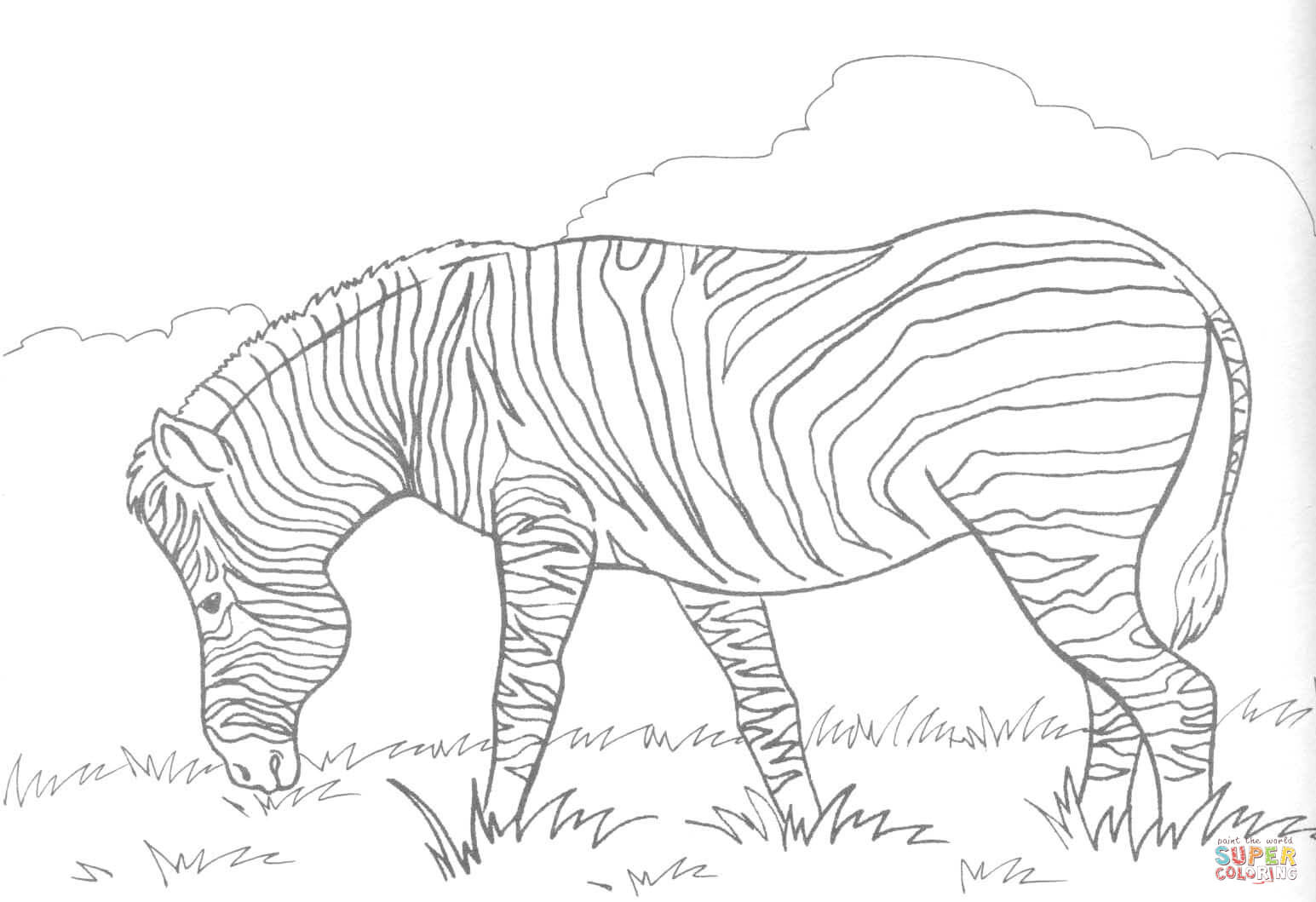 zebra eats grass coloring page free printable coloring pages