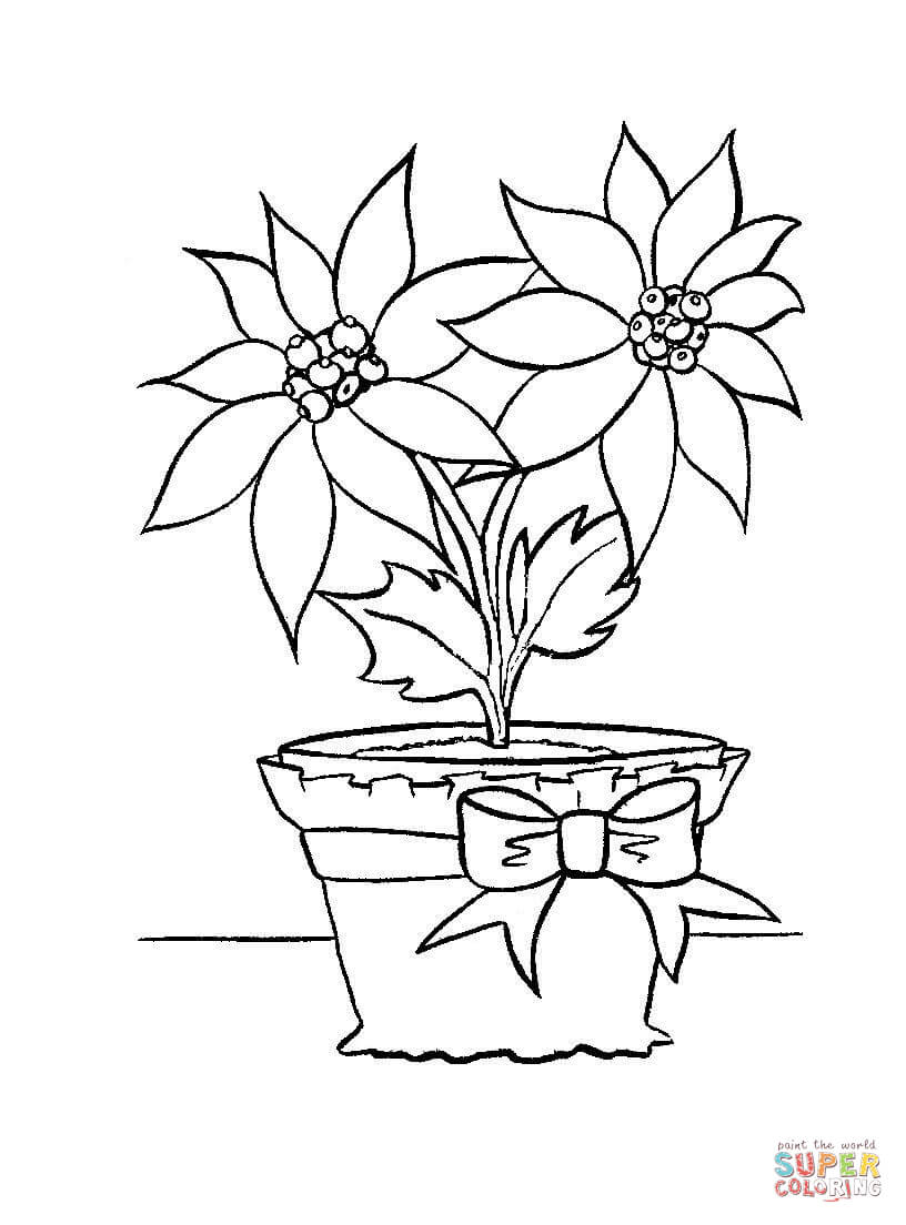 christmas flower in in a pot coloring page  free