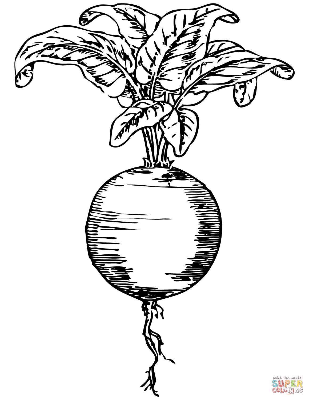 Kolorowanka Ilustracja Buraka