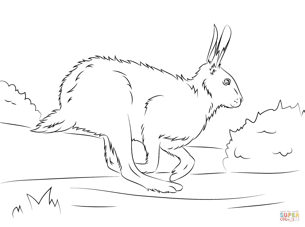 Desert Hare Coloring Pages Sketch Coloring Page