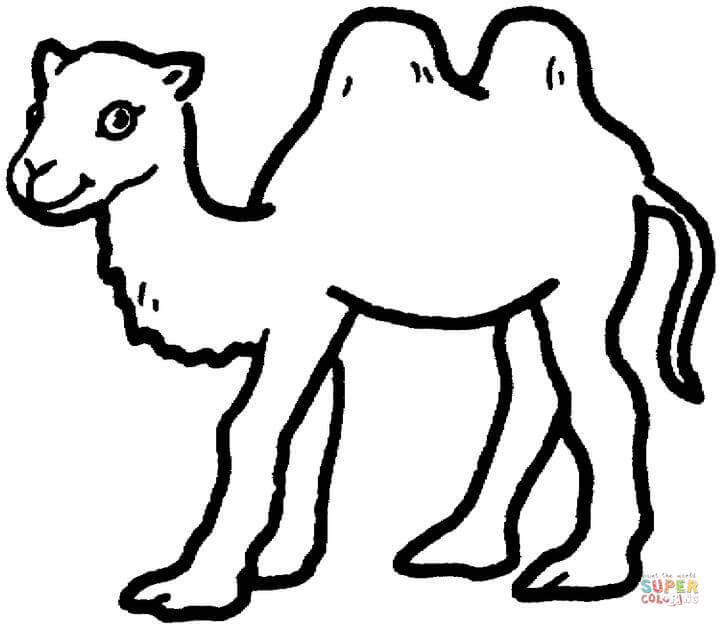 camels coloring pages free coloring pages
