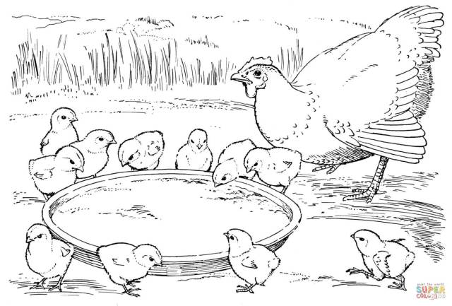 Hen and chicks coloring page  Free Printable Coloring Pages