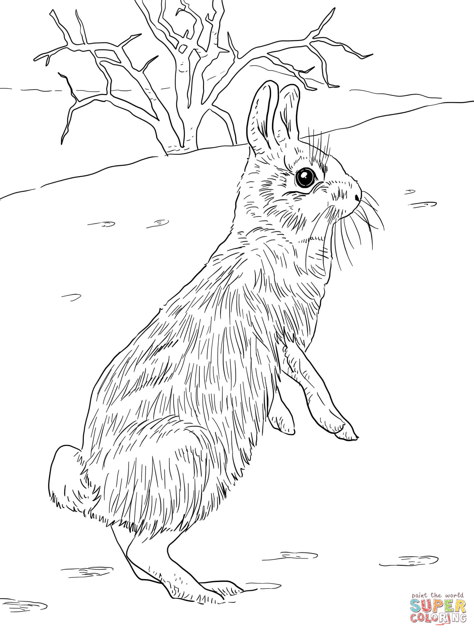 Eastern Cottontail Rabbit Coloring Page Free Printable Coloring