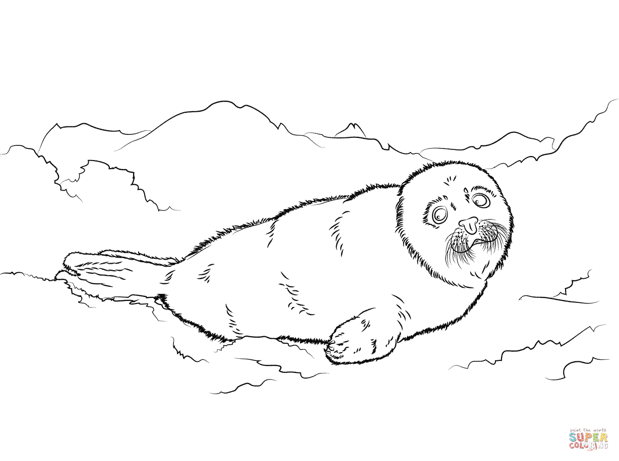 cartoon baby seal coloring pages images amp pictures becuo
