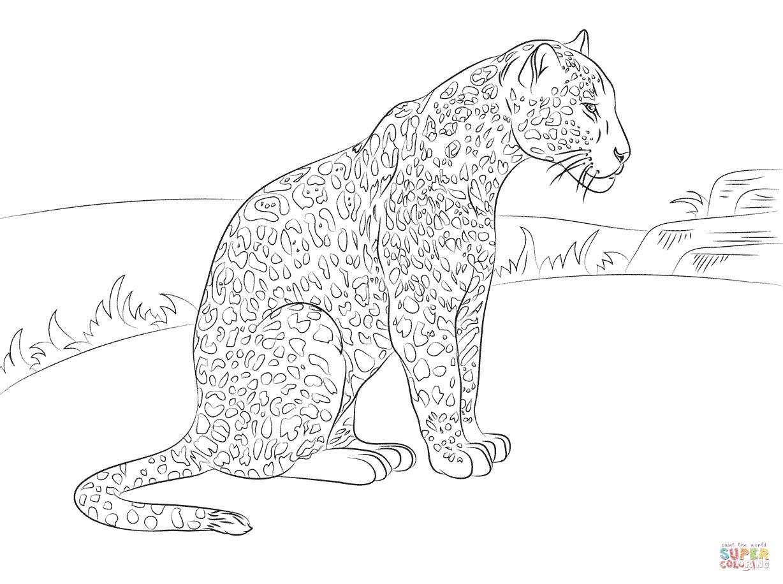 cute-jaguar-coloring-pages.png