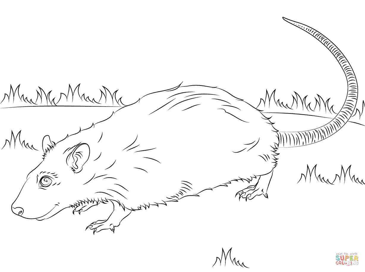 Rats Coloring Pages Free Coloring Pages