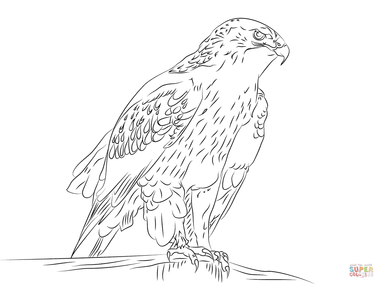 Ferruginous Hawk Coloring Page Free Printable Coloring Pages