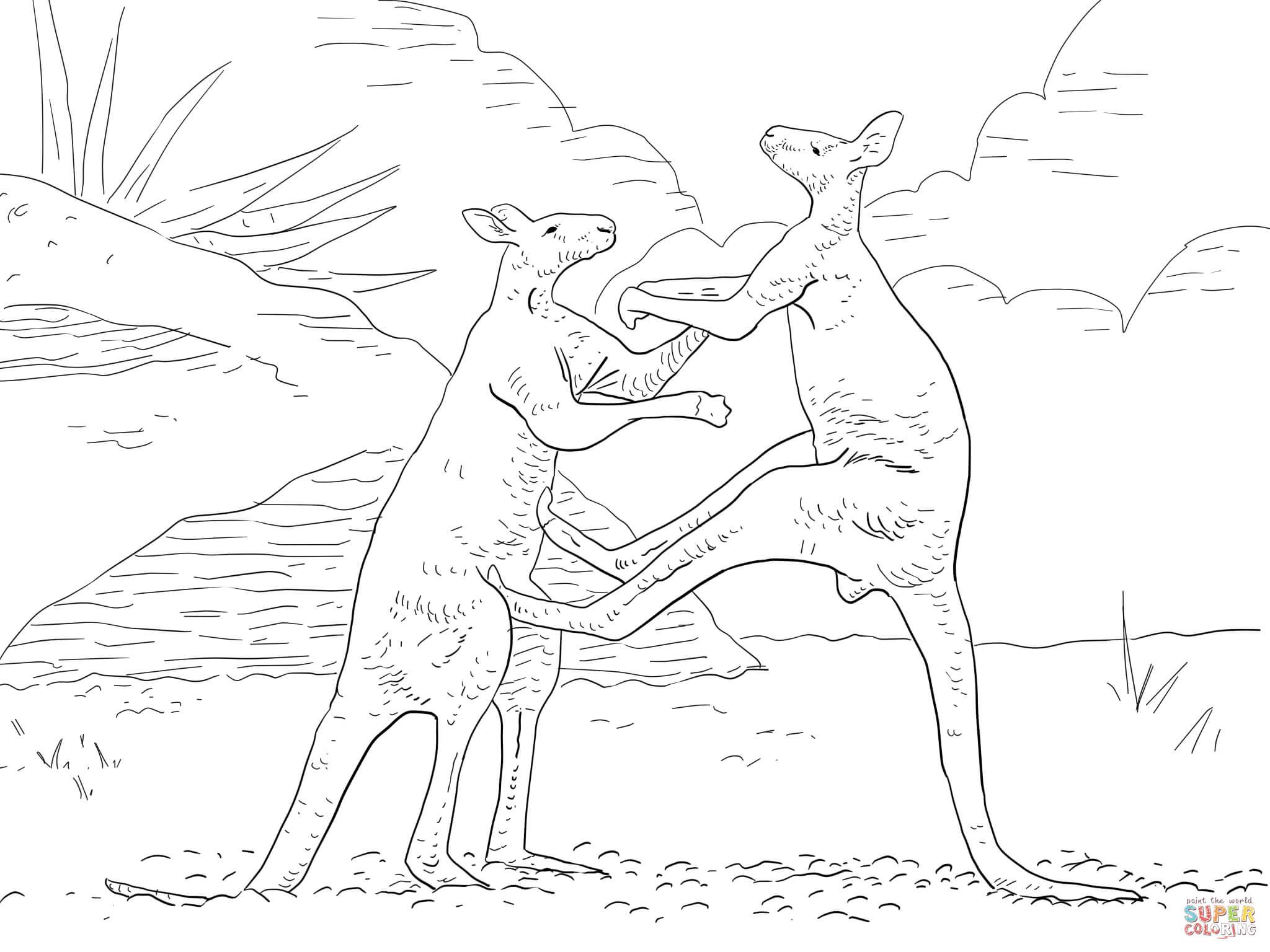 Fighting Red Kangaroos Coloring Page