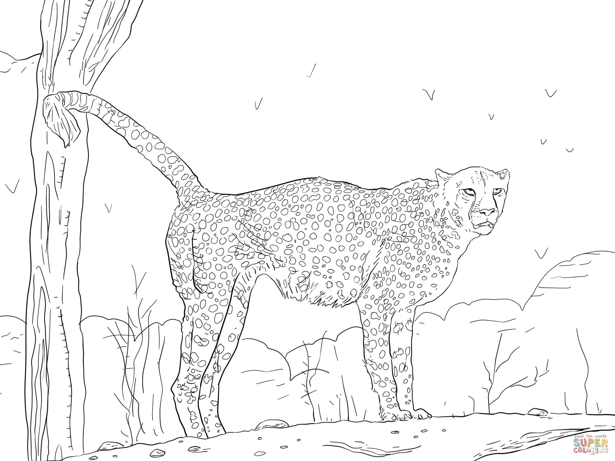 namibian cheetah coloring page free printable coloring pages