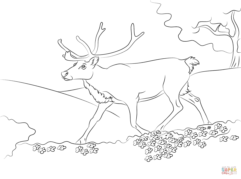 Springande Ren M Larbok