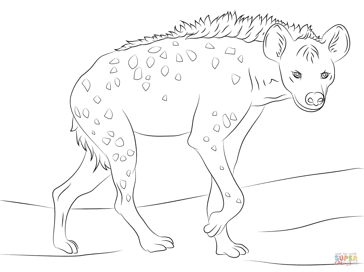 Spotted Hyena Coloring Page