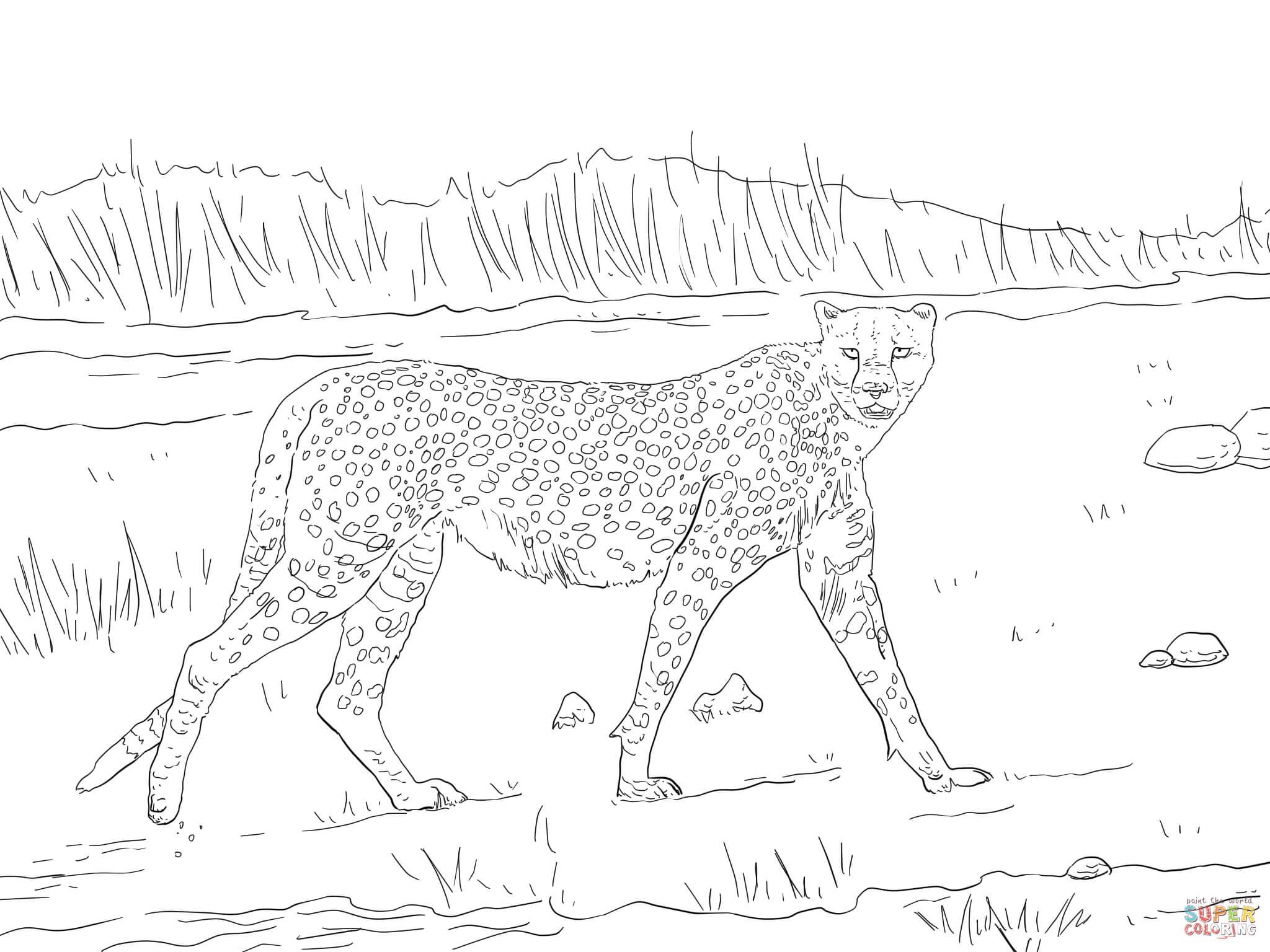 Tanzanian Cheetah Coloring Page
