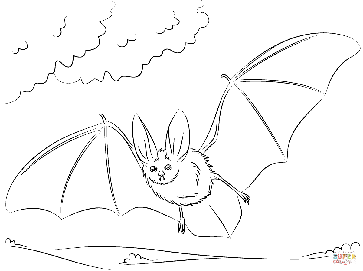 cute bat coloring pages to print coloring pages