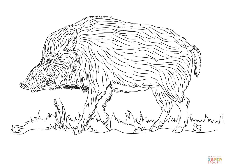 Wild Boar Walks Coloring Page