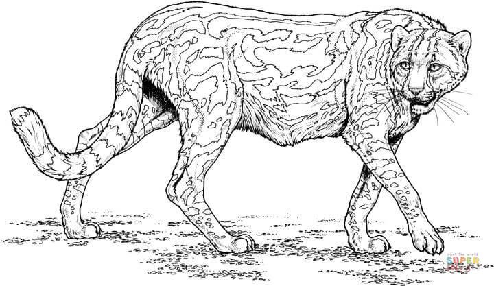 Cheetah Lopend Kleurplaat Gratis Kleurplaten Printen