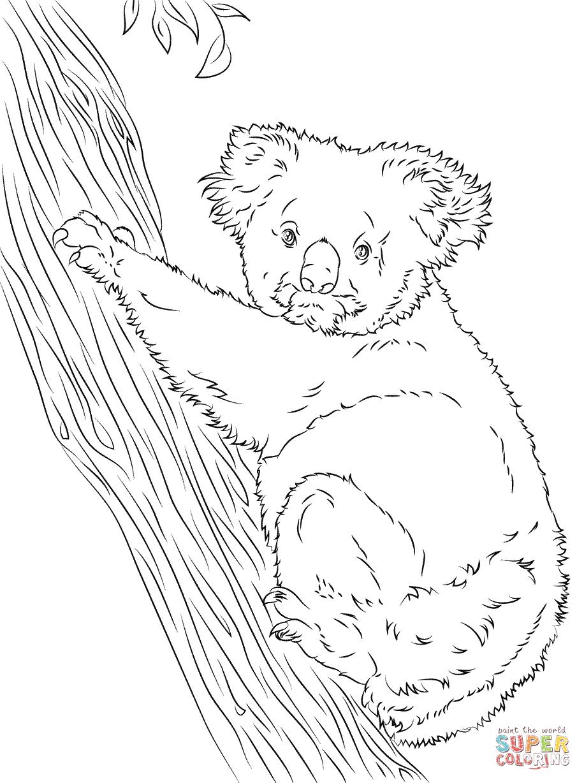 Koala Climbing A Tree Coloring Page Free Printable