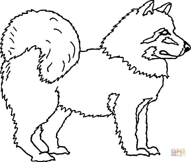 american eskimo dog coloring page free printable coloring pages