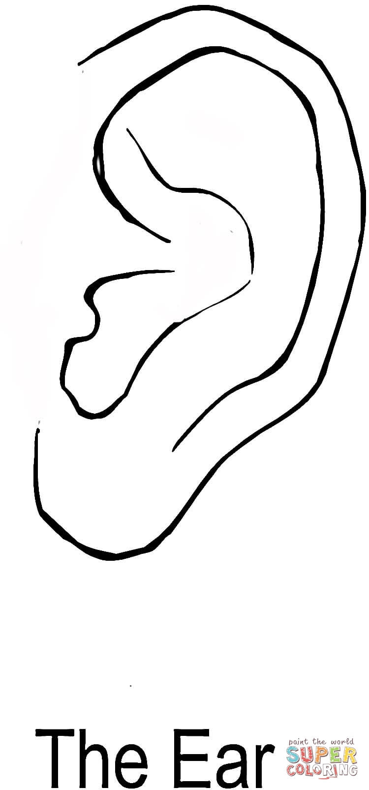 The Ear Coloring Page Free Printable Coloring Pages