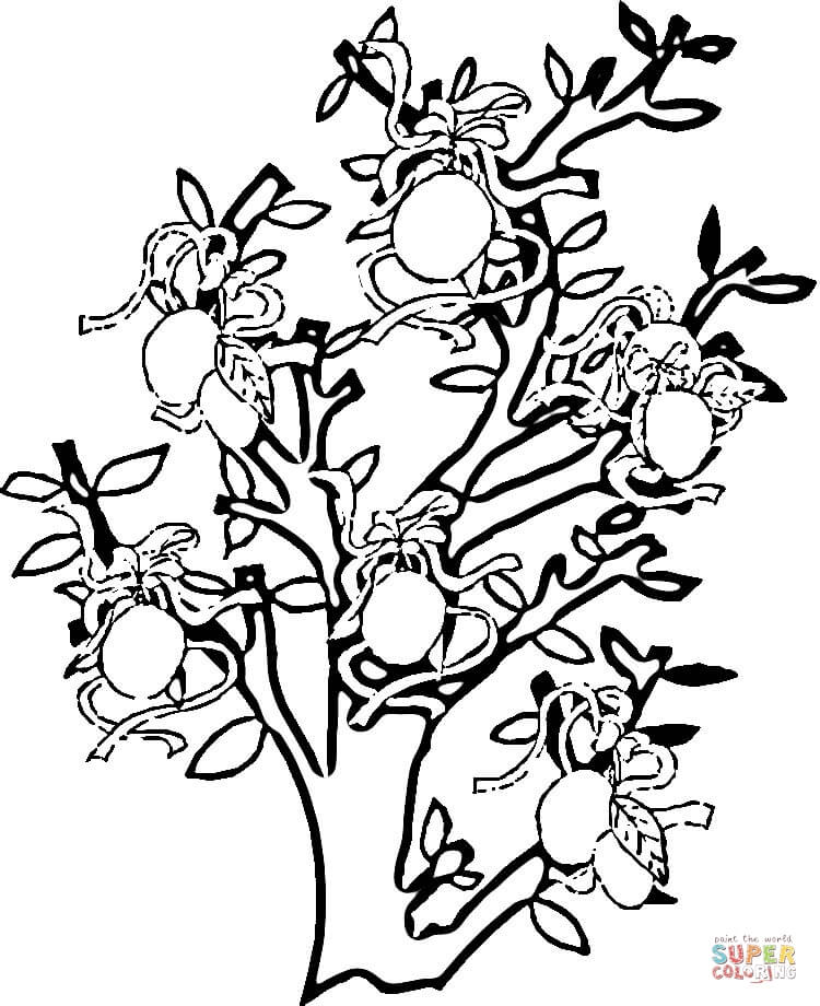 lemon tree coloring page free printable coloring pages