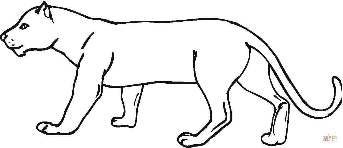 Panther Coloring Page Free Printable Coloring Pages