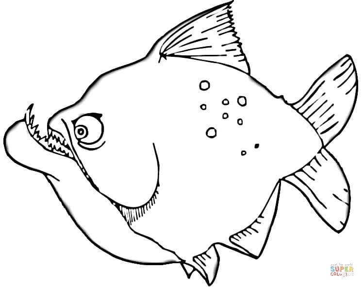 pin swordfish coloring page animals town color sheet on pinterest