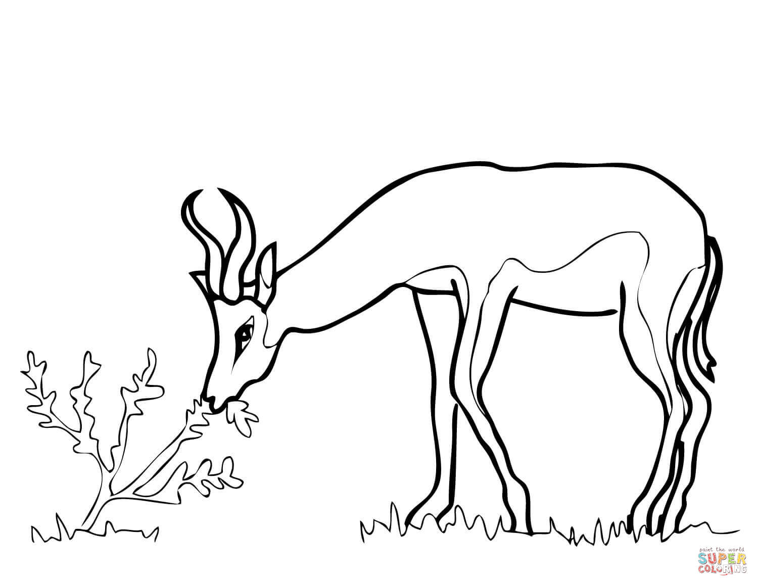 Springbok From South Africa Coloring Page