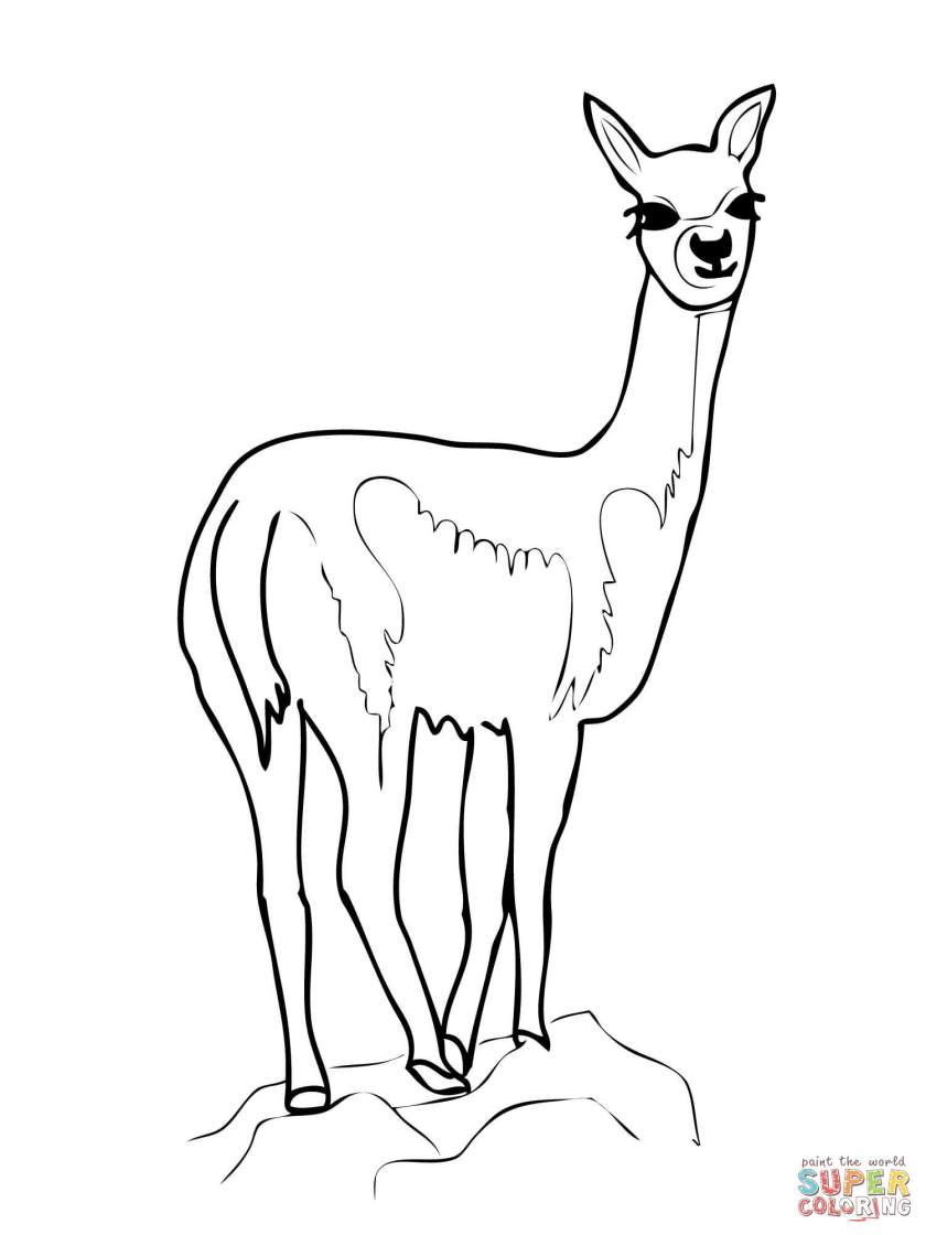 vicuña (vicugna) coloring page  free printable coloring pages