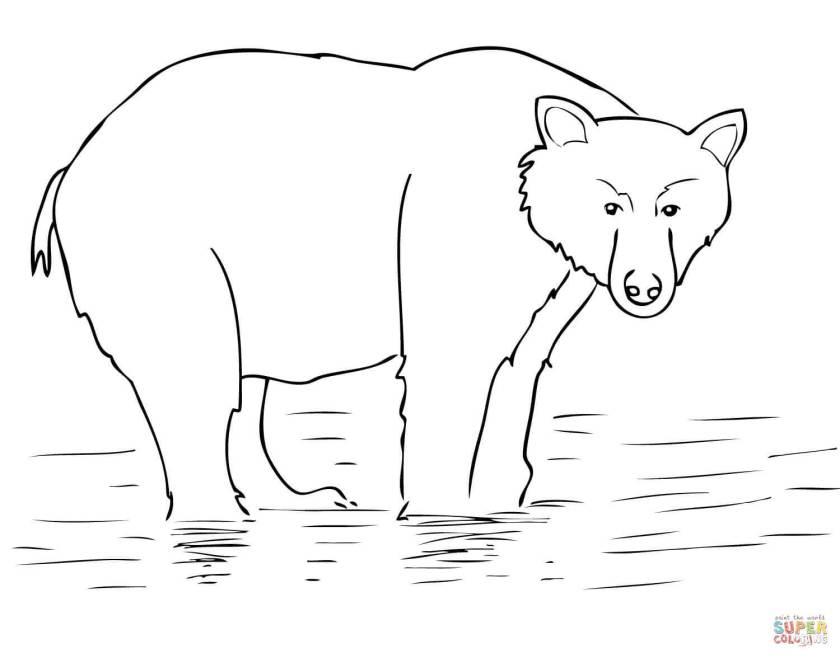 alaska brown bear coloring page  free printable coloring